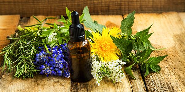 Phytotherapie bei Krebserkrankungen – spezielle Pflanzen mit Heilwirkung bei Krebs – Praxis für Behandlung mit alternativer Krebstherapie